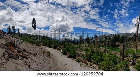 Devils Postpile National Monument, Burnt Forest - stock photo