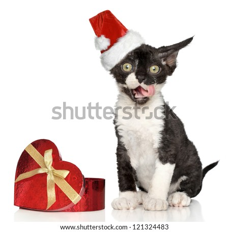 Devon Rex kitten in Santa Christmas red hat yawn on a white background