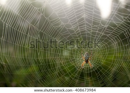 Dew covered spiderweb with an oak spider in the center, selective focus - stock photo