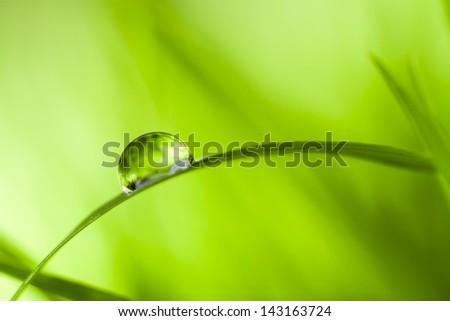 dew drop - stock photo