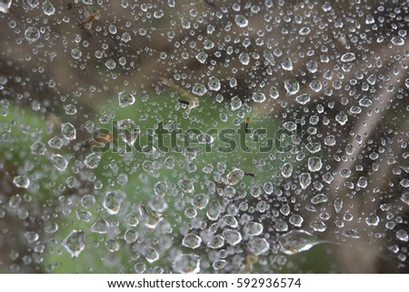 dew drop on cobweb in the morning