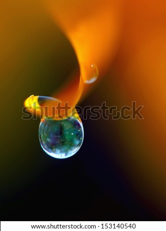 Dew drop on orange flower petal - stock photo