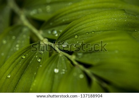 dew drops - stock photo