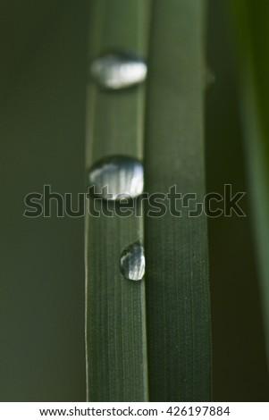Dew drops after rain - stock photo