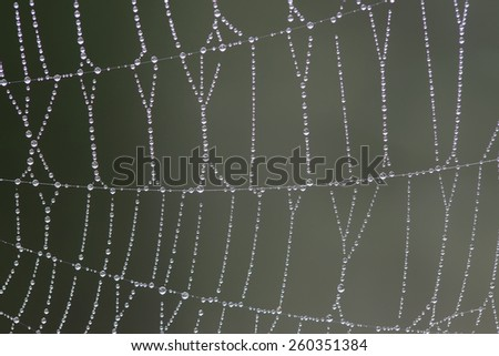 Dew drops on a spider web. Abstraction - stock photo