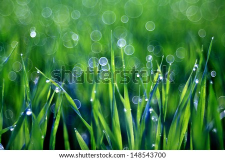 dew drops on blades of grass - stock photo