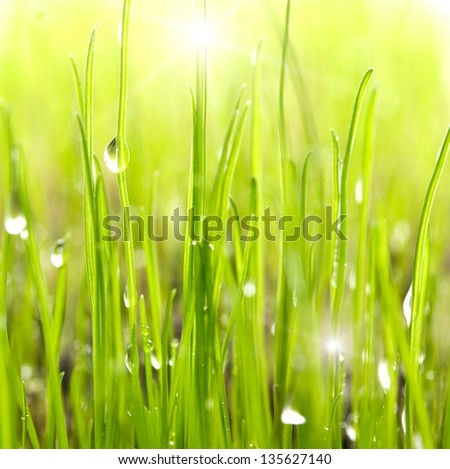dew drops on bright green grass - stock photo