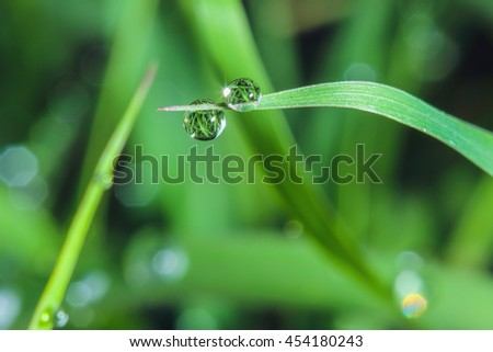 Dew  drops on  fresh green leaves