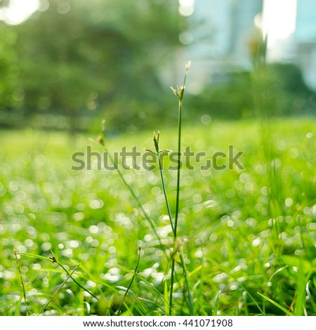 dew drops on green grass - stock photo