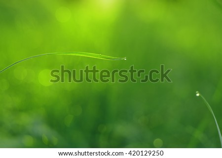 Dew drops on green grass background