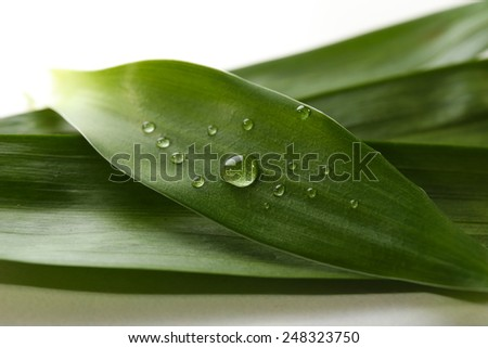 Dew drops on leaves on light background - stock photo