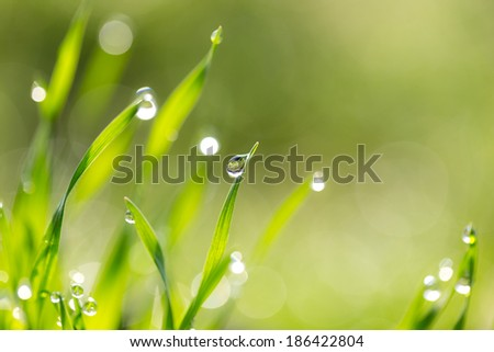 dew drops on the green grass. macro - stock photo