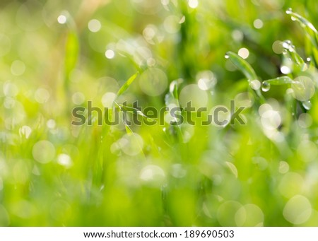 dew drops on the green grass. macro