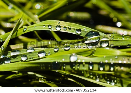 Dew drops on the green grass, on natural background