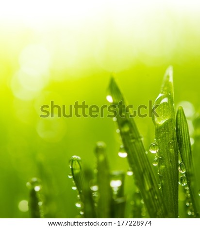 Dew on a fresh green grass - stock photo