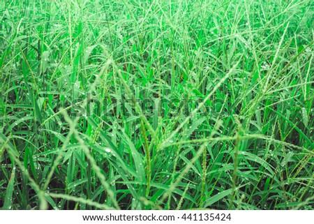 Dew on a green grass - stock photo