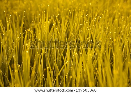 Dew on grass at sunrise in the mountains - stock photo