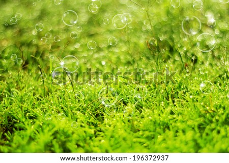 Dew on green grass and soap bubbles under the morning sunlight.