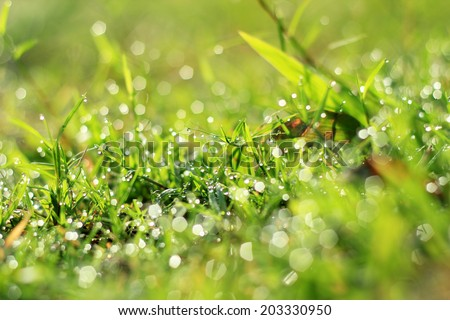 Dew on green grass under the morning sunlight.