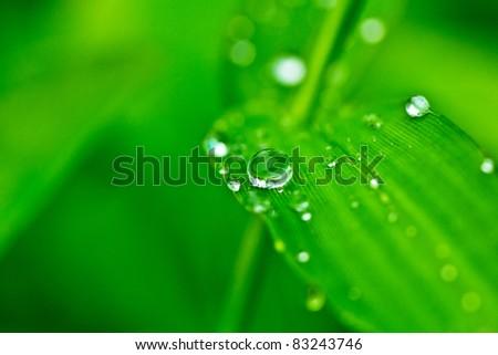 Dew on leaf after raining - stock photo