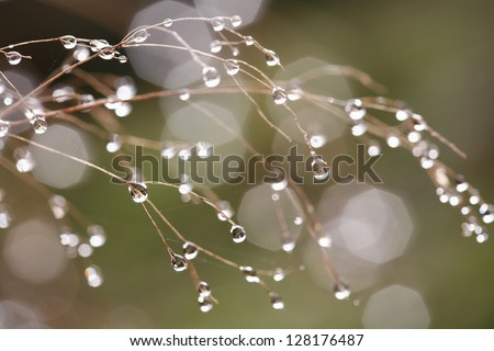 Dew on leafless branches