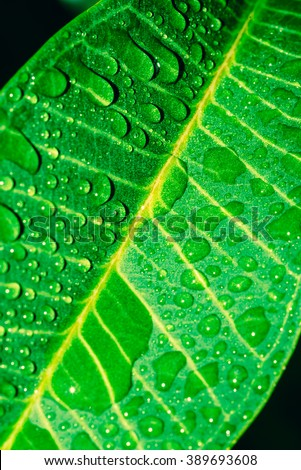 Dew on leaves - Stock Image