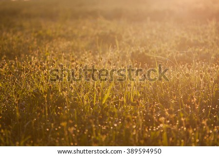 Dew on the grass, drops on the green grass, warm sunshine, morning came, dawn - stock photo