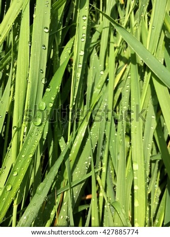 dew on the green grass - stock photo