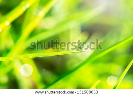 Dew on the green grass close up