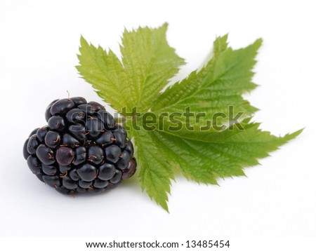 dewberry - blackberry, object on a white background
