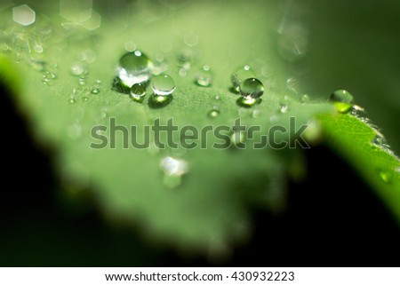 dewdrops on a green leaf