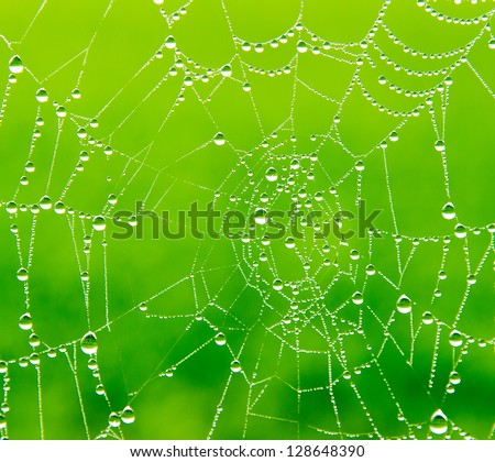 Dewdrops on a spider web - stock photo