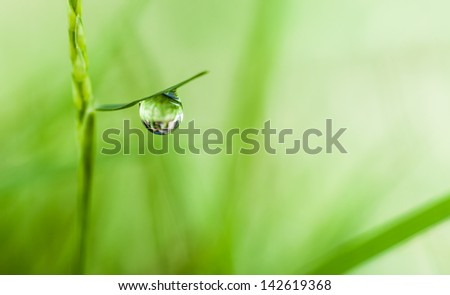 dews,dew drop,clear,water drop,drop,green