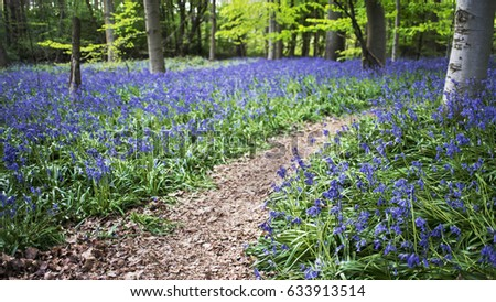 Diagonal pathway through a bluebell woodland scene