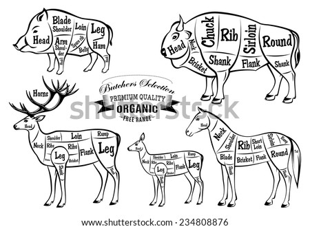 stock photo diagram cut carcasses of boar bison deer horse 234808876 cutting up deer diagram field dressing a deer diagram \u2022 wiring  at bayanpartner.co