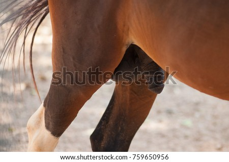 Close up anal pics
