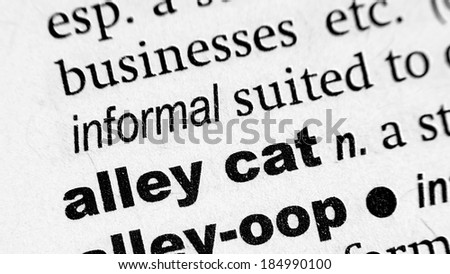 Dictionary definition of the term Alley Cat - stock photo