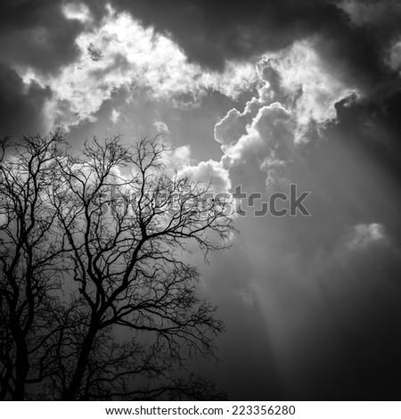 die tree with god light - stock photo