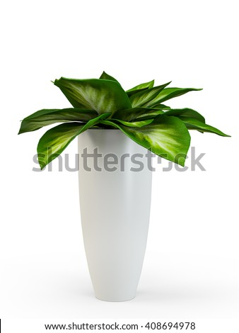 Dieffenbachia potted plant isolated on white background. 3D Rendering, 3D Illustration. - stock photo