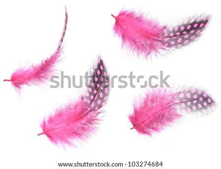 Different angles of the guinea fowl Purple feathers collection, Isolated on the white background