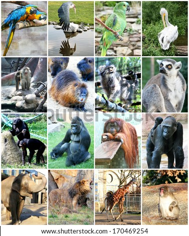 Different animals in Zoo - stock photo