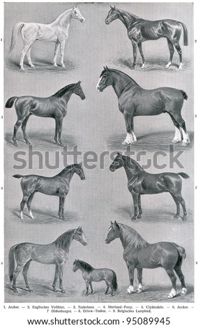 """Different breeds of horses. Publication of the book """"Meyers Konversations-Lexikon"""", Volume 7, Leipzig, Germany, 1910 - stock photo"""