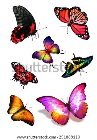 Butterflies Design Stock Vector 206854078 - Shutterstock