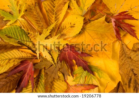 Different colored leaves as autumn background