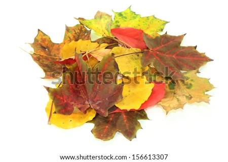 different colorful autumn leaves against white background