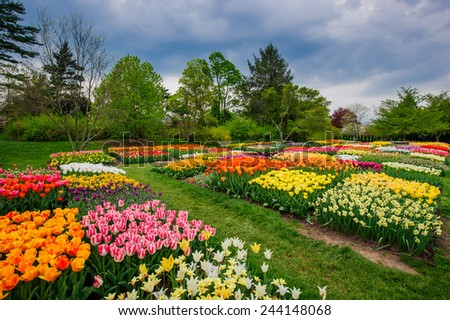 Different colors tulips in the park - stock photo