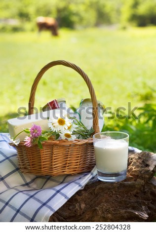 Different dairy products: cheese, cream, milk, oil. On a nature background - stock photo