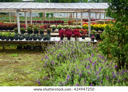 Different flower plant in greenhouse. Tomohon is City of Flowers. North Sulawesi. Indonesia