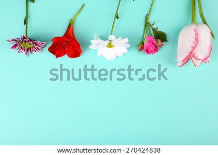 Different flowers on colour background - stock photo