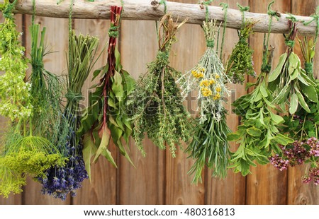 different fresh herbs hanging on a tree branch
